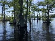 Flooded Cypress Flats