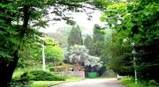 Парка - лес  2