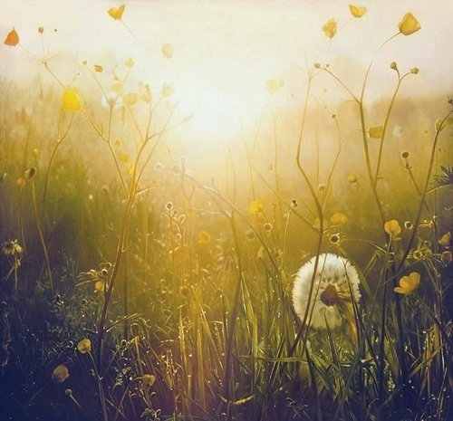 qwelly | blog | შერიგება | sun