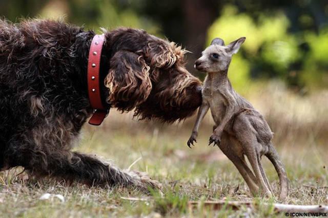 dogs, babies, qwellybeby, შვილები, მშობლები, ძაღლები, ლეკვები, კნუტები, კვატები, კატები, დათვები, ბელები, მაიმუნები, ჰიპოპოტამები, თევზები, ფლორა, ფაუნა, ქველიბლოგი, ქველიგრაფია, ქველი, ბლოგი, blog, qwellyland