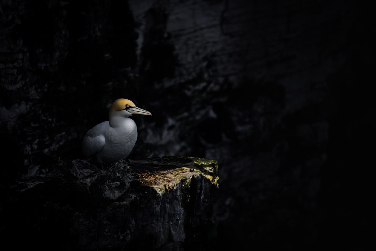 ჩიტები, ფოტოგრაფია, ფოტოხელოვნება, ბლოგი, birds, chitebi, chitebi fotografiashi, qwelly, qwellygraphy, qwellyland, photography