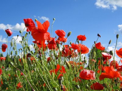 გაზაფხული, გაზაფხულდა, მარტი, ფოტოები, განწყობა, ქველიბლოგი, ქველი, blog, qwelly, spring