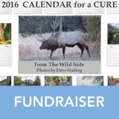 2016 Calendar For A Cure