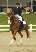CARD Equestrian Clinic with Diane Creech