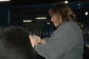 Equine Massage - Introductory Techniques