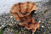 Water Baskets/Woven Waves #6 and #7
