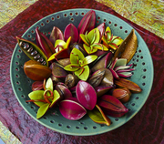 Tropical flowers and seed pods