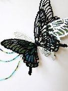 Download Nature- Papilio paris nakaharai (detail)