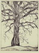 Iowa Mennonite School Tree III