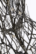 Field Study: Thicket, 2013