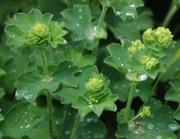 Kräuter- und Heilpflanzenkunde für die Selbstversorgung - Kompaktkurs