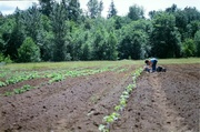 Whatcom County Grain Growing