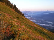 Cultivating the Wild—Slideshow about traditional Coast Salish landscape management