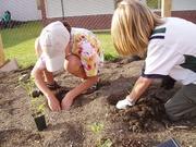 Fairhaven Middle School Plant Swap