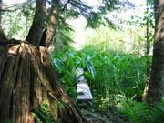Earthways Adult Nature Awareness Camp