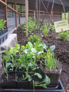 Fairhaven Middle School Plant Sale and Garden Work Party