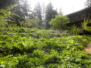 Seed Saving and Perennial Food Forest Gardening