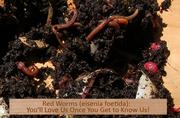 Soil building/composting workshop