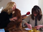 Opnames voor de hondenfilm; honden in de kou.