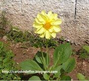 Projeto Reflorescer  -  Adote uma flor!