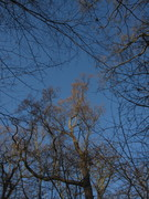 Winter Tree Walk in Alexandra Park