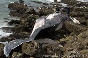 Plight of Cetacean in Southern California