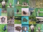 """Visita al Centro de Recuperación de Fauna """"La Granja de El Saler"""""""