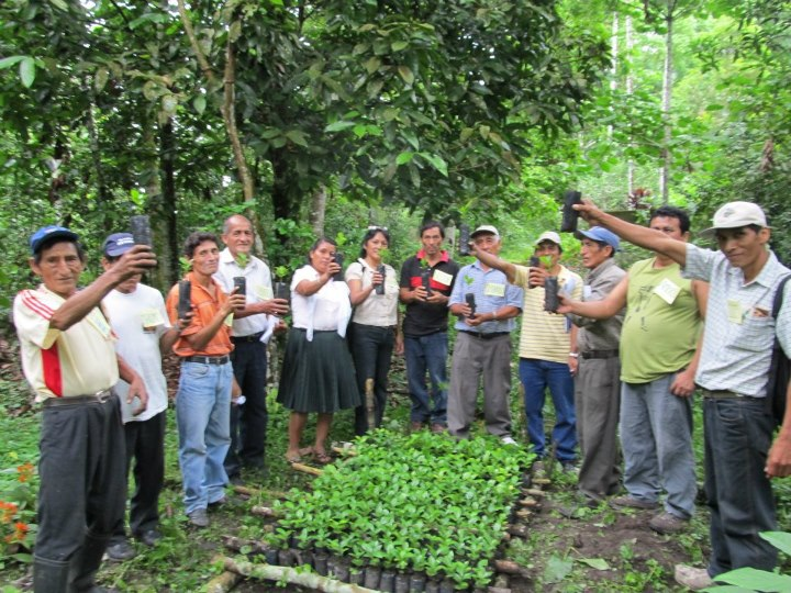 Plantación Agroforestal