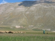 Shephard near Casteluccio