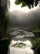 Monet's Lilly Pond - Paris