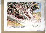 Ancient cypress, Moonstone Beach, Cambria