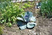 A garden in Lungern