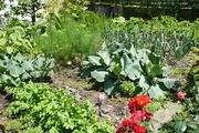 Lugern garden