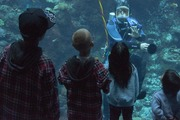 buzo acuario DSC_2667