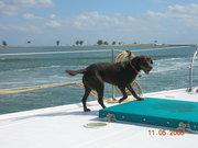 Lola prowling the decks