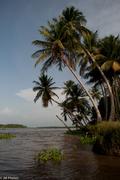 Paseo delta del Orinoco 2-7-2011
