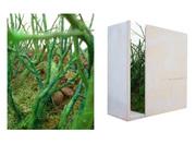 Landscape Box, 2006