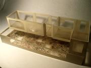 bacteria house