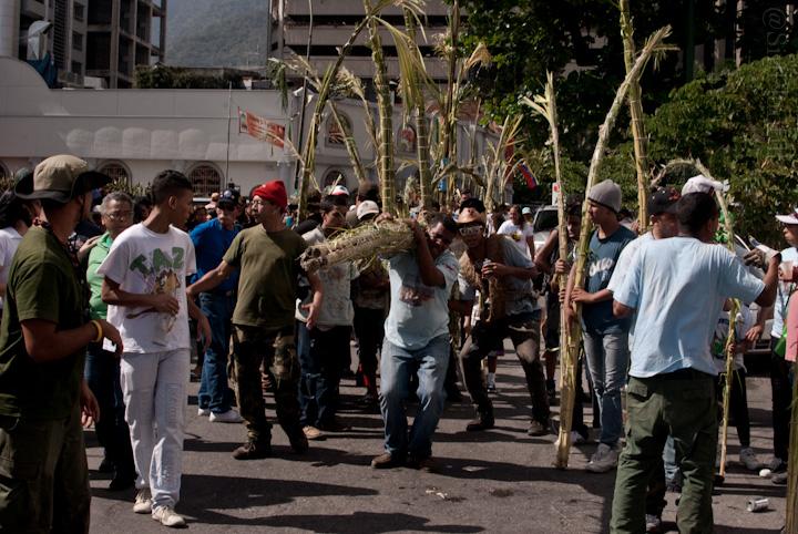 Palmeros de Chacao 2012