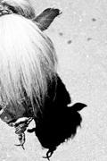 D3_un_pony_varonil