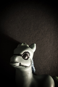 un-pony-varonil-ec