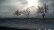 trio trees