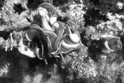 seaweed 1