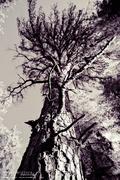 'die Wälder #100' (limited)
