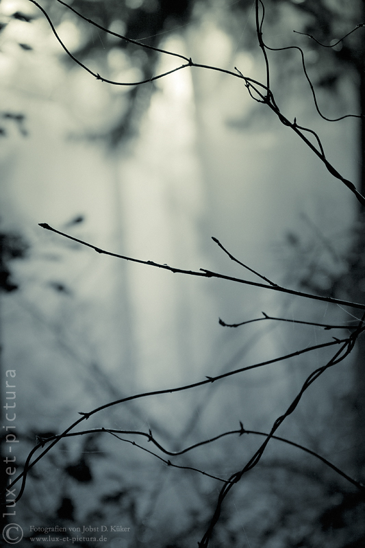 die Wälder #142 / the woods #142