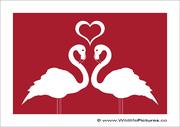 Heart of Flamingos