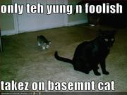 Only teh yung n foolish takez on basemnt cat