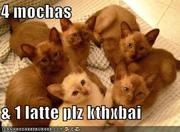 4 mochas and latte
