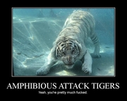 amphibious attack tiger