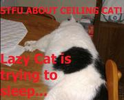 Lazy Cat VS Ceiling Cat